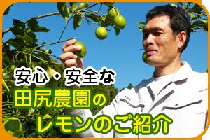 田尻農園レモン特集